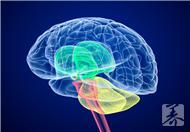 脑白质脱髓鞘