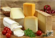 奶酪和芝士