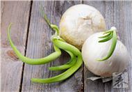 大蒜发芽能吃吗?大蒜的储藏方法