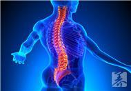 脊椎运动操