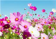 不宜室内种植的花卉