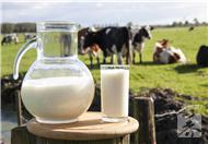 金典有机奶和纯牛奶区别