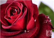 玫瑰护肤养生粥