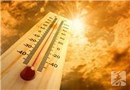 高溫天氣注意飲食,3種食物,清熱袪暑,排毒清腸