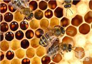 蜂胶和蜂王浆哪个好