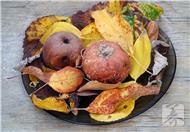 解析易变质食品-预防食物中毒