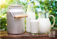 冬季养生饮品之牛奶