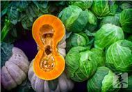 圆白菜泡菜的做法