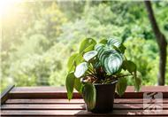 家中放什么植物好呢?