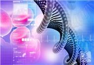 基因使造血干细胞转变为杀伤细胞