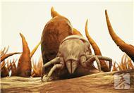 夏季螨虫引发5大肌肤问题 教你4招有效除螨虫