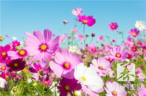 百合花语介绍旺家运的花卉风水