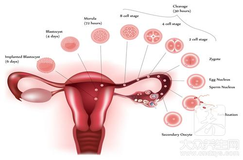 延缓卵巢衰老的食物