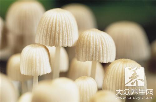 茶树菇怎么做