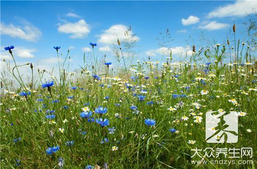 哪些花花草草有益身体健康(1)