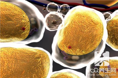 硬脂酸主要有什么作用?