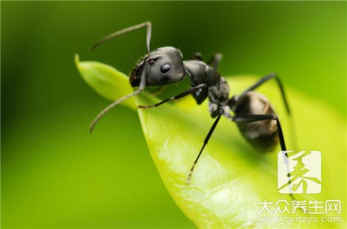 What does the advantage that wine of black ant bubble drinks have?