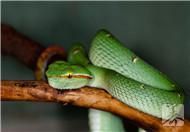 蛇酒有毒吗