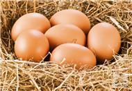 吃鸡蛋壳补钙的危害大吗?有何药用价值