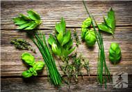韭菜不只是洗肠草,还能益阳,促消化,杀菌,治便秘,养肝健胃…