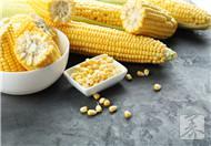 黄金玉米粒的做法大全有哪些