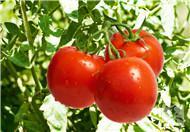 各类食物的消化时间:蔬菜需45分钟 肉类要4小时