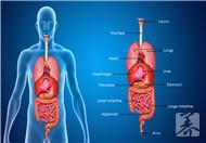 肝胆胰腺b超好还是ct好?b超前需注意什么