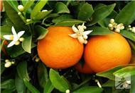 吃橘子、胡蘿卜不節制,小心吃成'黃臉婆'