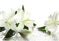 百合花的4种功效与3种作用