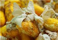 吃蚕蛹的禁忌有哪些?