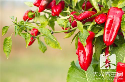 What is the practice of flesh of cook again of pointed any of several hot spice plants?
