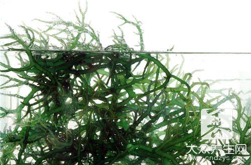 Bamboo leaf pondweed?