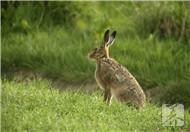 卤兔头的做法