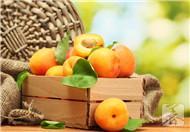 杏子的营养价值