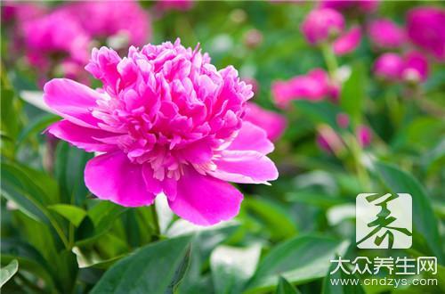 樱花树苗多少钱一棵(1)