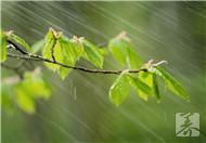春季过敏高发 防春季过敏远离过敏源