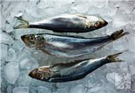 做鱼之前怎么腌制