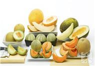 哈密瓜哪个品种好吃?