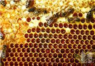蜂蜜能治肾虚吗,有哪些滋补方法?