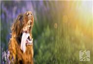 松鼠有狂犬病吗