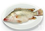 吃桂鱼的禁忌