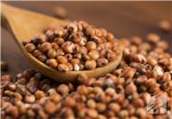 高粱米的功效与作用及食用方法