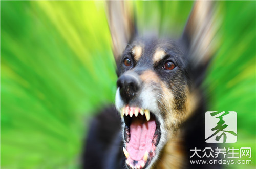 Dog meat and what photograph are overcome, cannot eat together