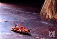 为什么家里突然有蟑螂?