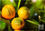 橘皮枕头怎么做