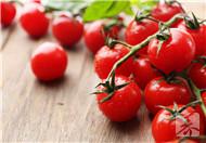 怀孕初期能吃番茄吗?