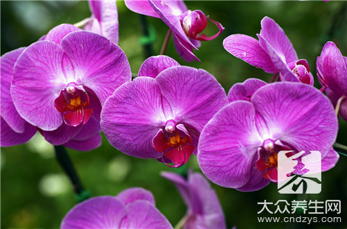 Iron sheet the stem of noble dendrobium treats what disease