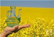 葡萄籽油和橄榄油区别
