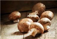 磨菇和西红柿能同吃吗