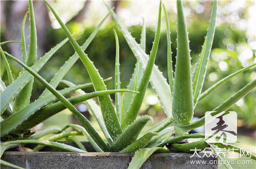 Do the contraindication that aloe bubble water drinks